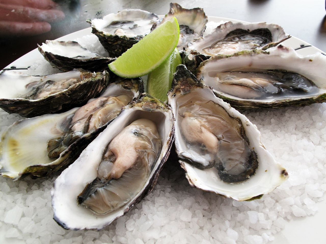 Oyster Farming Business Plan [Automated Process]