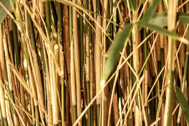 Bamboo straws small business ideas in Kerala